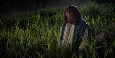 Why do I need a Savior?