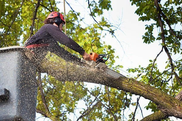 Guides to Consider When Finding the Best Company to Hire for Tree Services