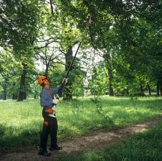 Getting the Best Tree Trimming Services
