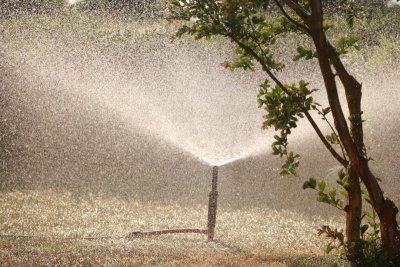 Guidelines for Choosing an Irrigation Services