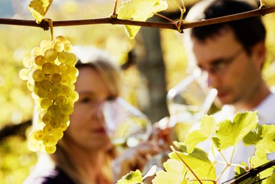 Benefit of Getting in Touch with D'vine Wine Tours