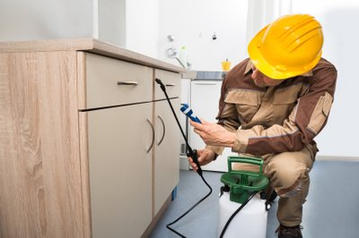 The Relevance of Hiring Pest Management Works Experts
